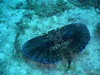 Caribbean Sea Life | Sea life and underwater animals from ...