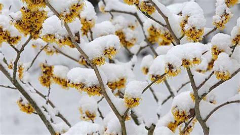 Blüten Und Duft In Eis Und Schnee