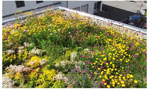 Dachbegruenung Pflanzen Fuer Die Extensivbegruenung by Extensive Dachbegr 252 Nung Selbst De
