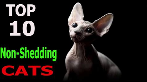 how to get your cat to stop shedding top 10 non shedding cat breeds top 10 animals