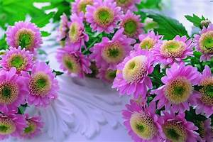 Nature Backgrounds, Hd Wallpapers, Mother Nature, Flower ...
