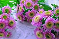 Cute Wallpapers Flowers Nature