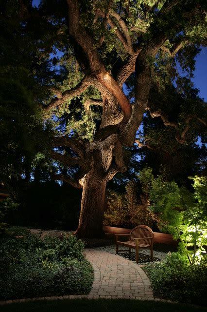 creative ideas  landscape lighting  dramatic backyard