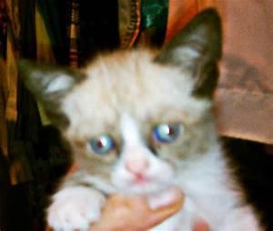 The Instant Cat Meme: Grumpy Cat | Mental Floss