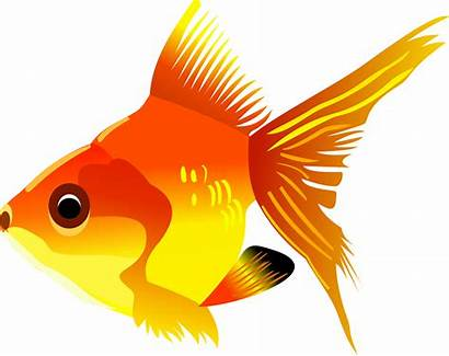 Orange Things Clipart Fish Clipground