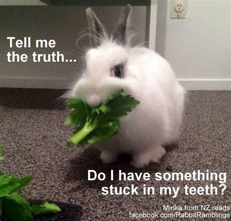 Silly Rabbit Meme Rabbit Ramblings Bunny Monday Meme Day