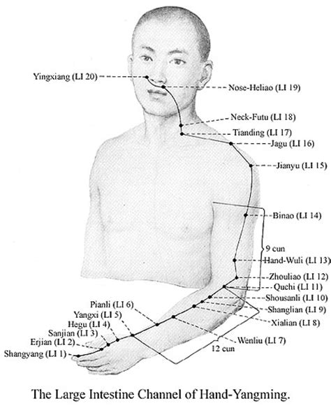 stomach meridian symptoms