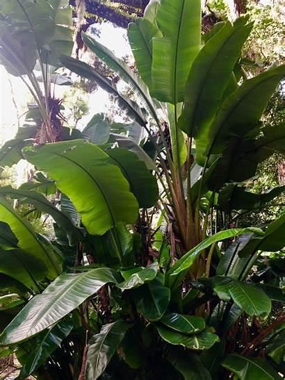 Tropical Plants Florida Trees Thankful Gratitude Foliage
