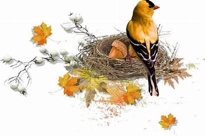 Autumn Bird Fall Clipart Birds Freebies Automne