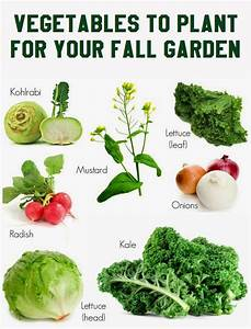 vegetables to plant for your fall garden vegetable With things to plant in a vegetable garden
