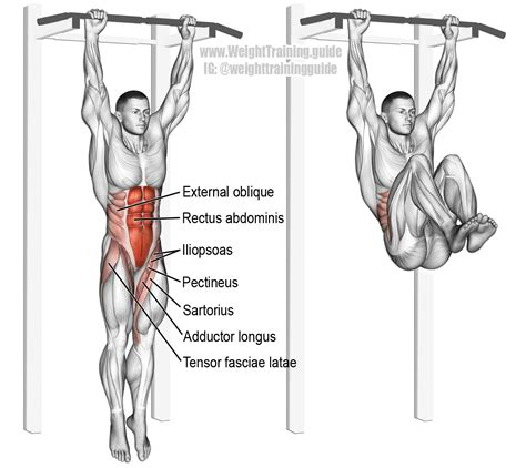 hanging leg and hip raise exercise guide w weight guide
