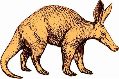 Aardvark Cliparts Clip Clipart Curiozitati Despre Lesson