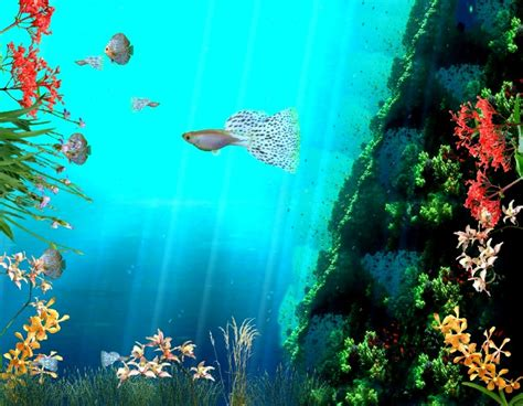 Coral Reef Animated Wallpaper - animated coral reef wallpaper wallpapersafari