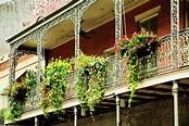 Retail Plant Rentals - Beneva Plantscapes