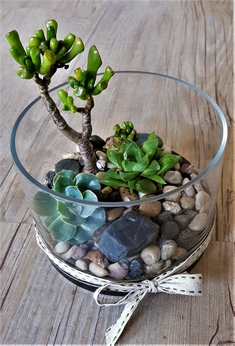 Plants - Succulent Garden - Flower Deliveries Online