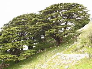 Lebanon Photos -Chouf Photos
