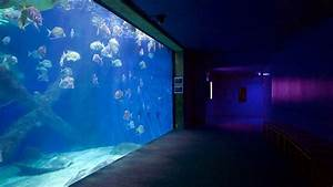 Visit Virginia Aquarium And Marine Science Center In Dam