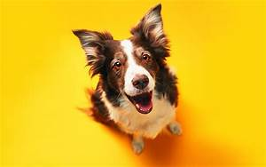 Funny Cats & Dogs Wallpapers : Details and Specifications ...