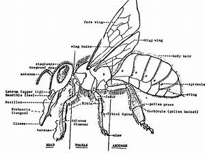 Bench Work  Share Honey Bee Hive Stand Plans