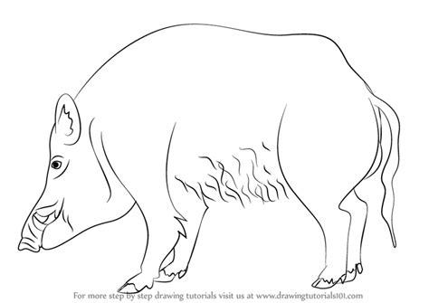 learn   draw  wild boar wild animals step  step