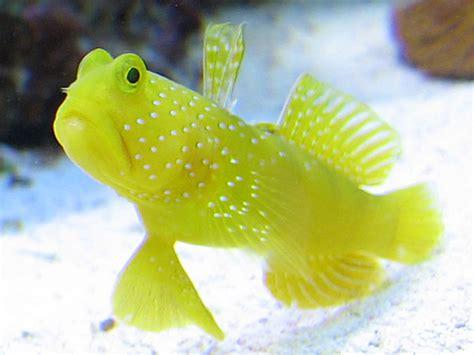 top  starter marine fish