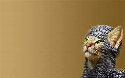 Cat Funny Chainmail Photoshop Cats Desktop Creative