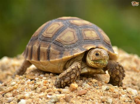 Images Of Turtles Tortoise And Turtle Shells And Potential Problems