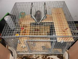 Chinchilla With Whole Set Up Cage - Nex-Tech Classifieds