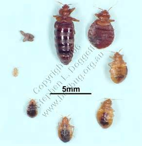 Treating Carpet Beetles by She S So New York New York Minute Bed Begs Infest Amc 25