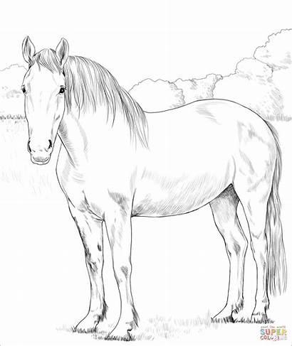Coloring Horse Irish Printable Ausmalbilder Draught Supercoloring