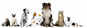 preparing your home for the dog sitter your hound With the dog sitter