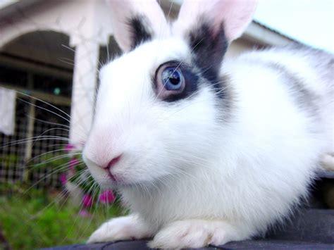 le langage du lapin le monde des lapins tout sur les