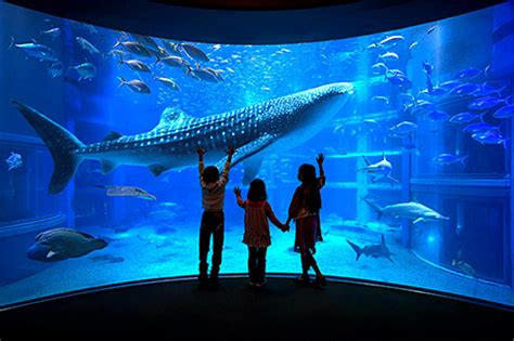 visiting aquariums in japan japan monthly web magazine