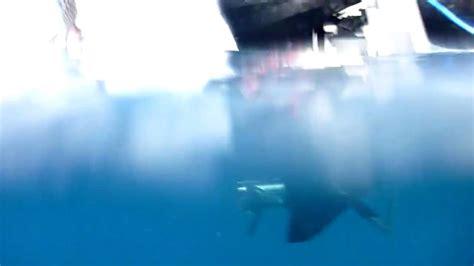 Boat Propeller Underwater by Propeller Underwater Speedboat