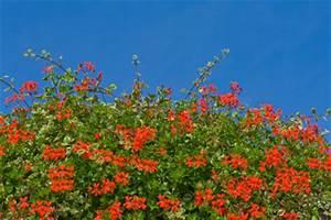 Pflanzen Die Viel Sonne Vertragen Und Wenig Wasser Brauchen : balkonpflanzen f r die sonne so finden sie die passenden blumen ~ Frokenaadalensverden.com Haus und Dekorationen