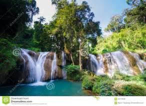 Tropical Rain Forest Paradise