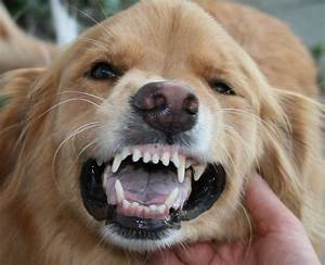 Dogs With Human Teeth