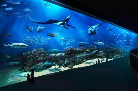 sea aquarium underwater world underwater world lonely planet