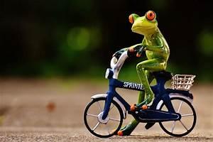 Frosch Bilder Lustig : kostenloses foto frosch fahrrad lustig niedlich kostenloses bild auf pixabay 1701075 ~ Whattoseeinmadrid.com Haus und Dekorationen