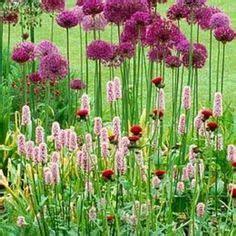 die  besten bilder von pflanzenkombinationen