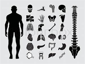 Human Anatomy Black  U0026 White Icon Set