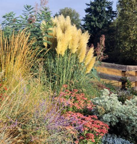 ornamental grasses  midwest gardens midwest living