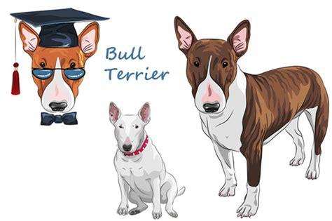 bull terrier cartoon character designtube