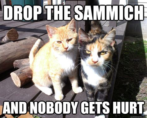 Sammich Meme - drop the sammich and nobody gets hurt bully cats quickmeme