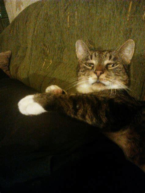 Unamused Cat Meme - unamused cat meme unamused cat meme unamused