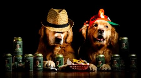 funny treat dogs animals background wallpapers