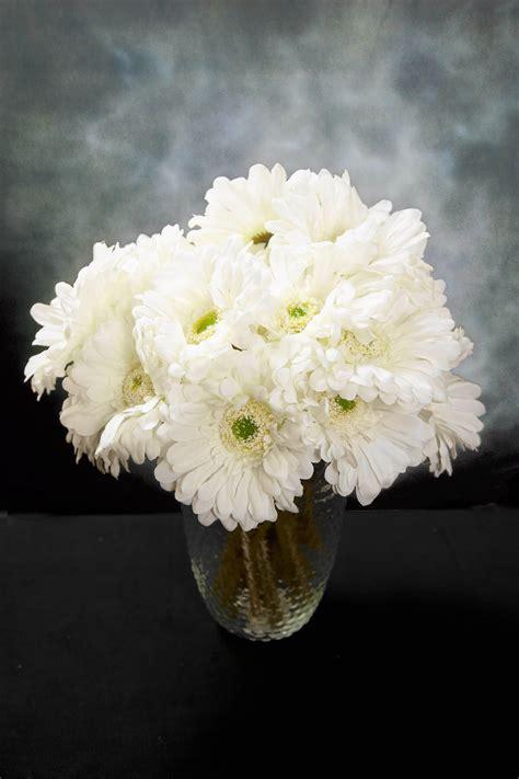 cream white gerbera daisy flowers