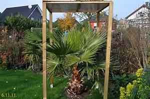 Winterschutz Für Pflanzen Selber Bauen : palmen und co winterschutzvorbereitung 2011 ~ Whattoseeinmadrid.com Haus und Dekorationen