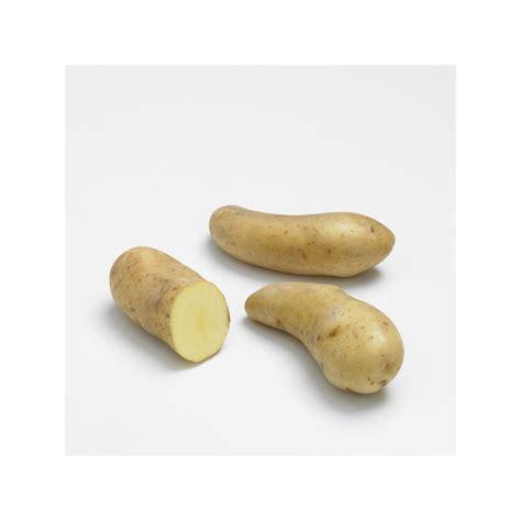 cuisiner des pommes de terre ratte pomme de terre 39 ratte 39 plantes et jardins