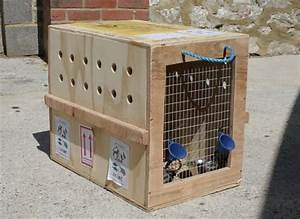 Pet travel import and export whitehouse kennels for Dog shipping kennels